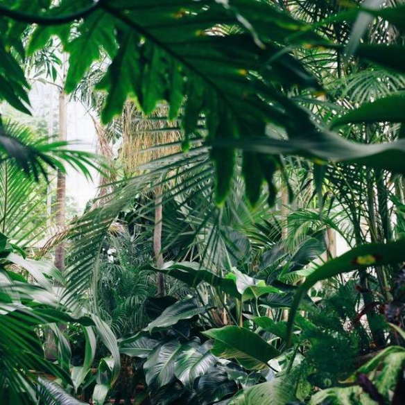 Shopping tip: Welcome To The Jungle